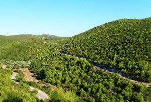 Natuur op Zakynthos