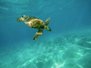 Duiken griekenland schildpad